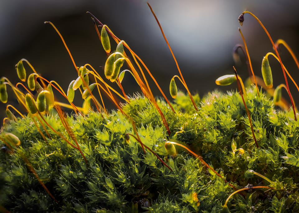 Moss, Nature, Spring, Plants, Countryside, Plant