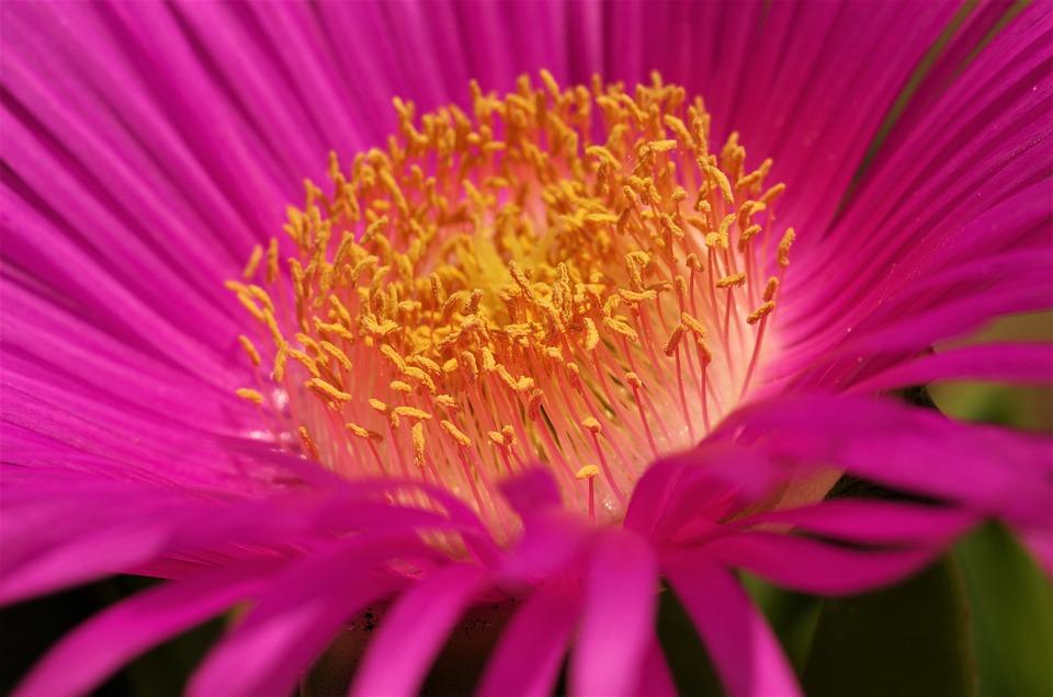 Flower, Spring, Macro, Pollen