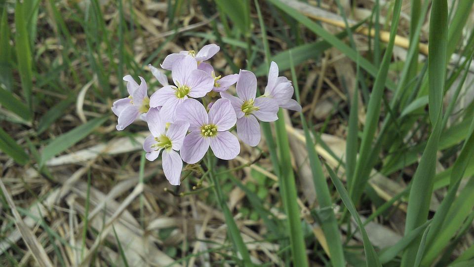 Flower, Incomplete, Plant, Flowers, Pollen, Spring