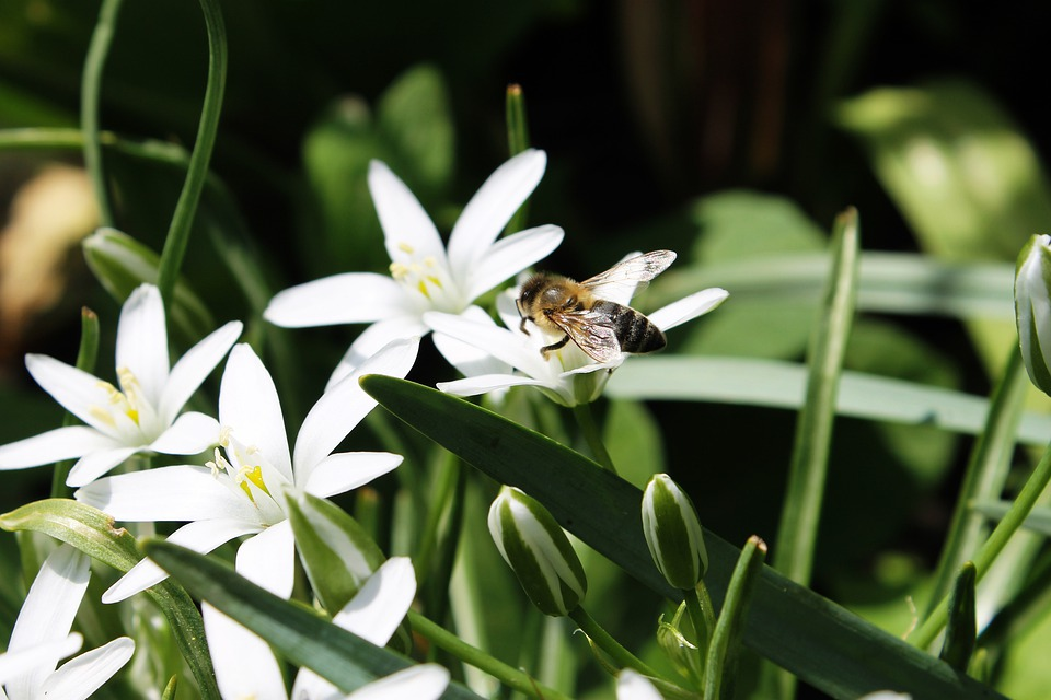 Spring, White Flowers, Bee, Green, Honey, Pollen