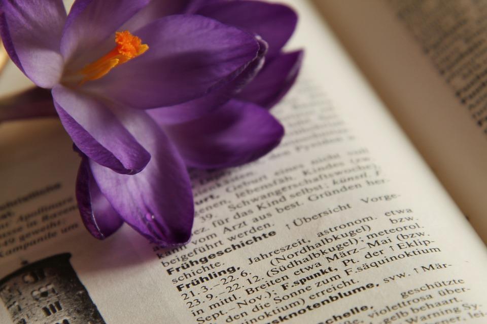 Crocus, Book, Read, Frühlingsanfang, Spring, Close Up