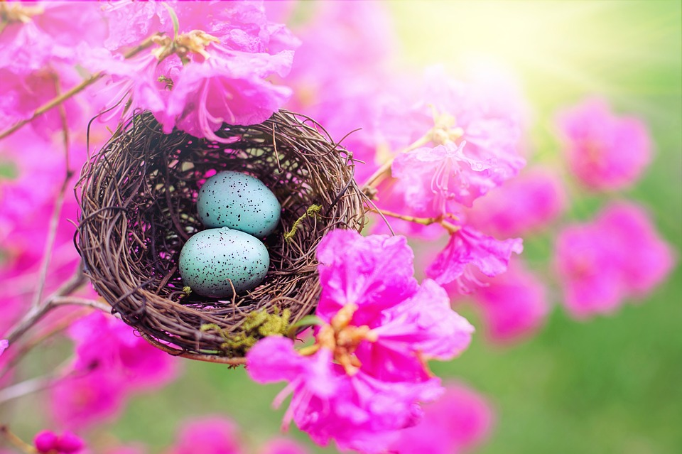 Nest, Robin Nest, Pink, Rhododendrons, Spring, Nature