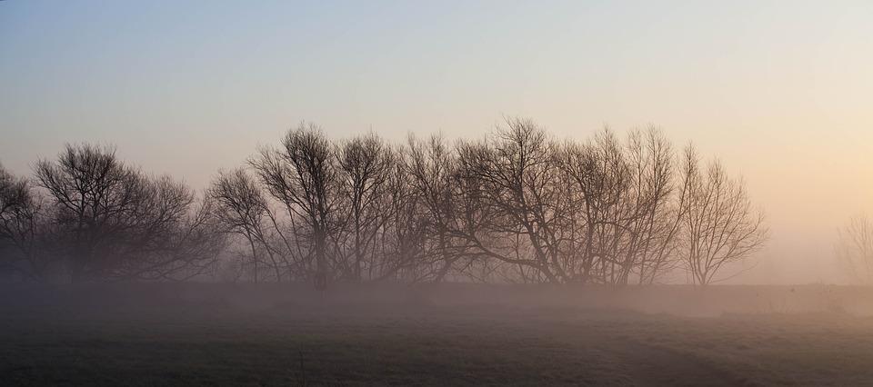 Misty Morning, Riverbank, Mist, Spring, Calm, Scene