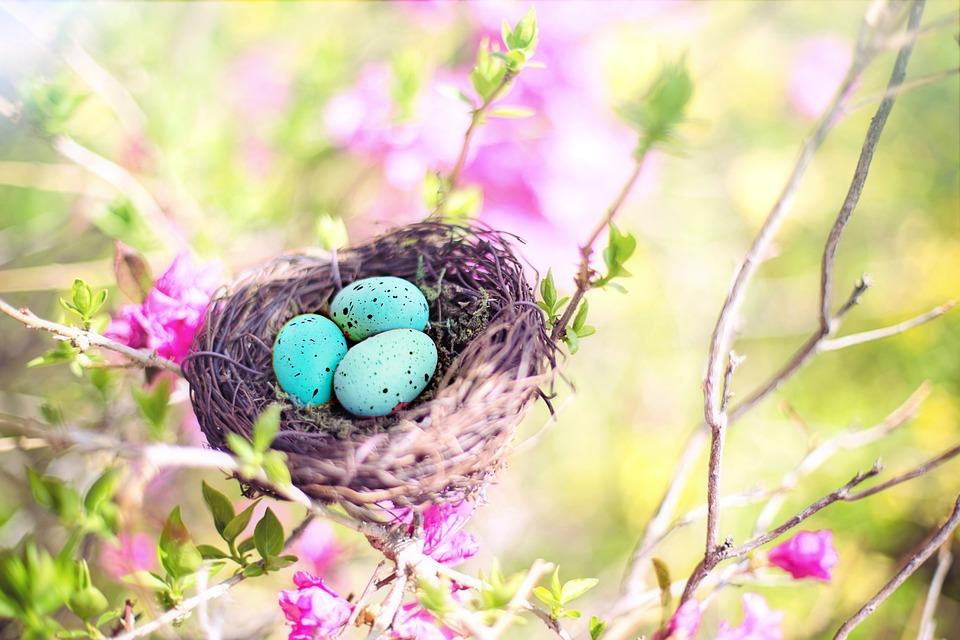 Spring, Bird's Nest, Eggs, Robin Eggs, Nature, Season