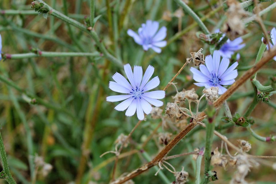 Free photo spring season plant flower garden nature outdoors max pixel flower plant spring garden nature season outdoors mightylinksfo Gallery