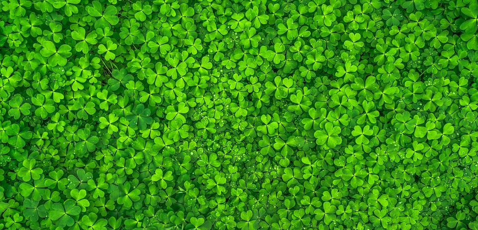 Leaf, Clover, Green, Shamrock, Spring, Abstract, Plants