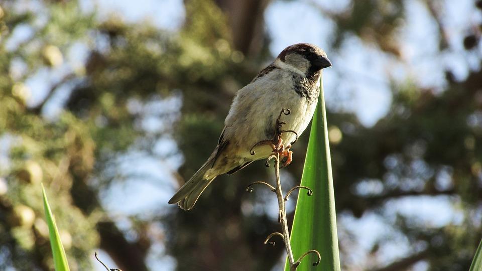 Sparrow, Bird, Sitting, Tree, Nature, Spring
