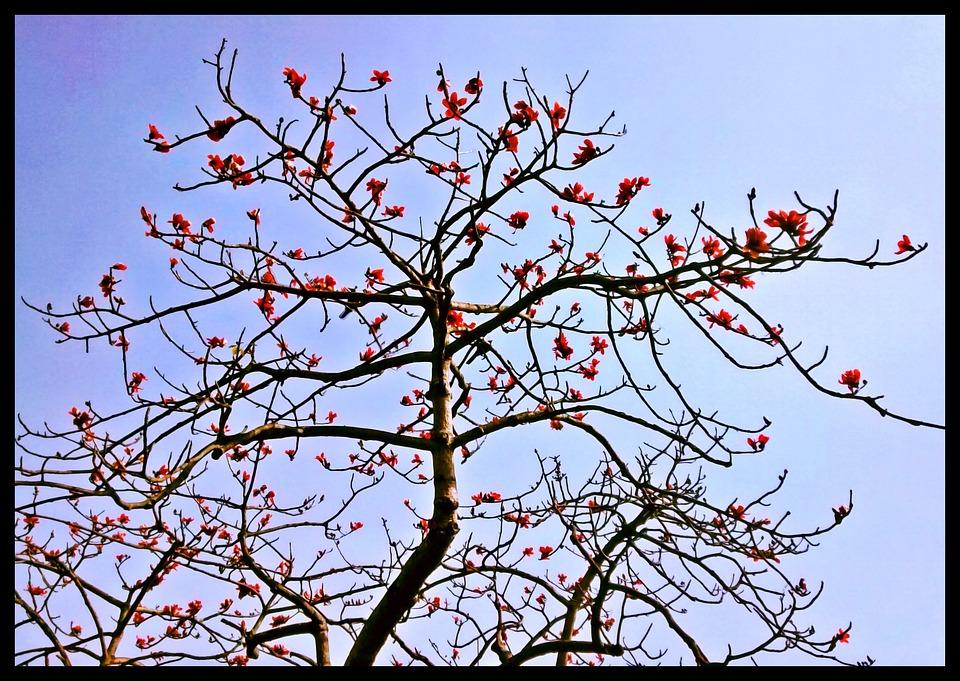 Spring, Flowers, Sky