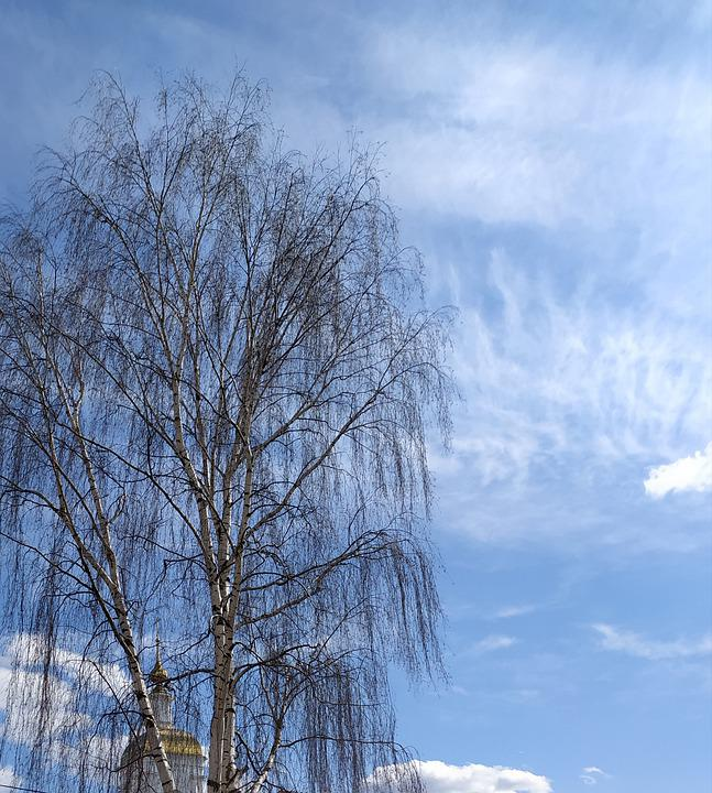 Spring, Tree, Sky, Blue, Dome, Temple, Orthodoxy