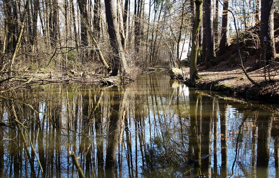 Water, Tributary, Stream, Wetland, Reflection, Spring