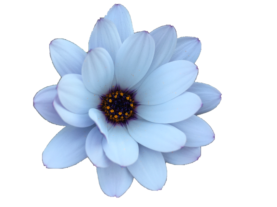 Daisy, Flower, Floral, Plant, Summer, Spring, Nature