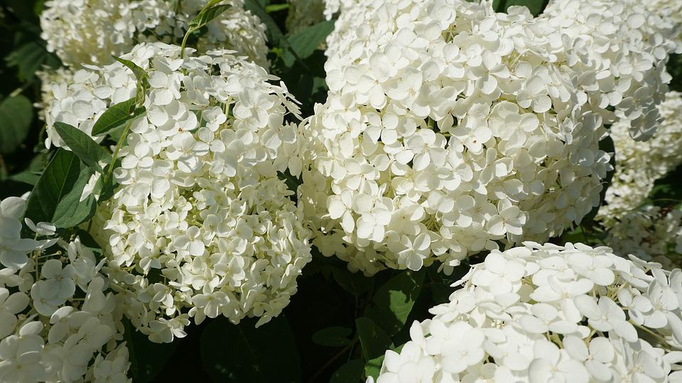 Flowers, Summer, Summer Flowers, Nature, Spring, Floral