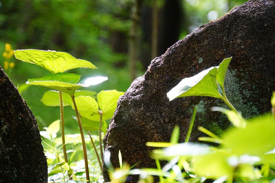 Green, Leaf, Natural, Plant, Spring, Summer