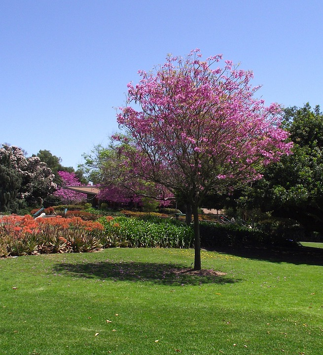 Free photo spring summer sky california trees flowers max pixel california spring summer flowers sky trees mightylinksfo