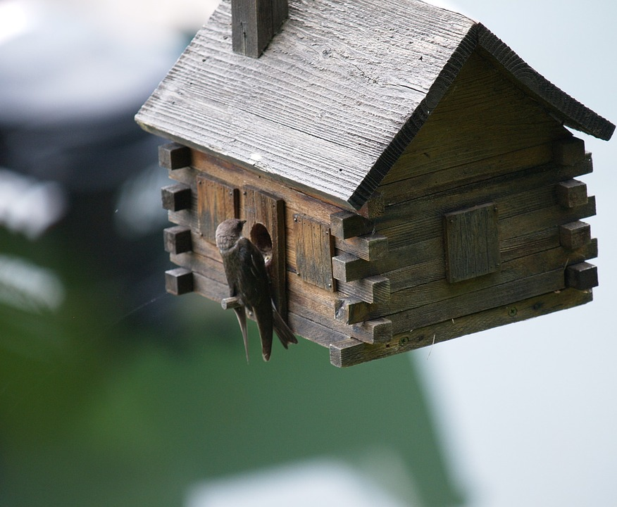 Swallow, Birdhouse, Spring