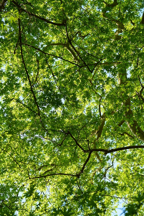 The Leaves Are, Green, Spring, Leaves, Nature, Plant
