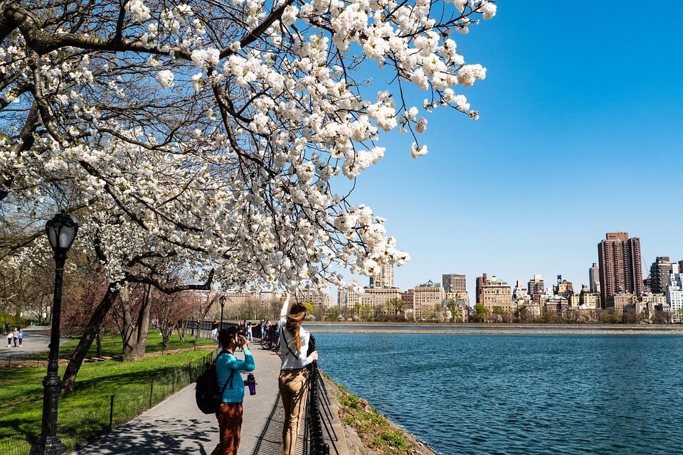 New York City, Central Park, Spring, Tree, Nature, Sky
