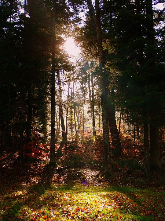 Forest, Nature, Trees, Green, Under Wood, Light, Spring