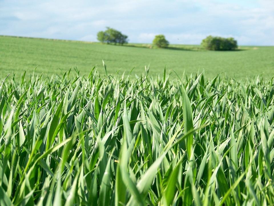 Field, Spring, Landscape, Meadow, Sky, Heaven, Trees