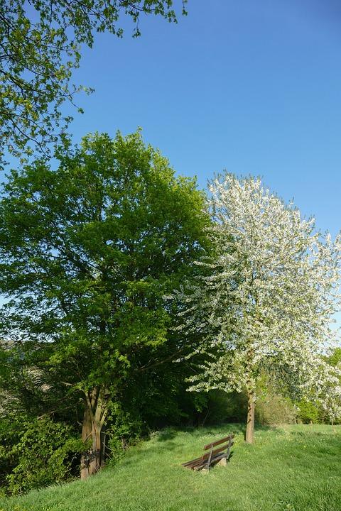 Spring Trees, Nature, Landscape, Spring, Season