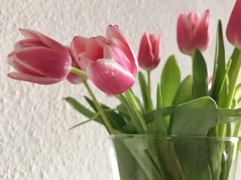 Tulip, Spring Flower, Spring, Flower Vase, Close, Bloom