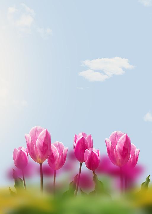 Tulips, Sky, Flowers, Spring, Spring Flowers