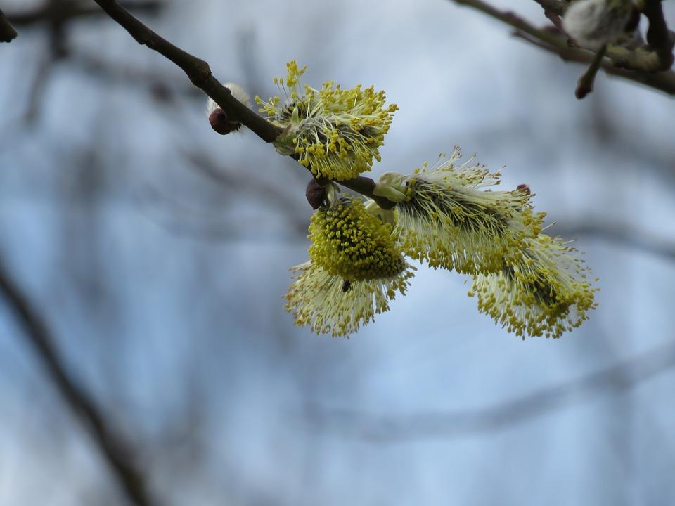 Verboczky, Spring
