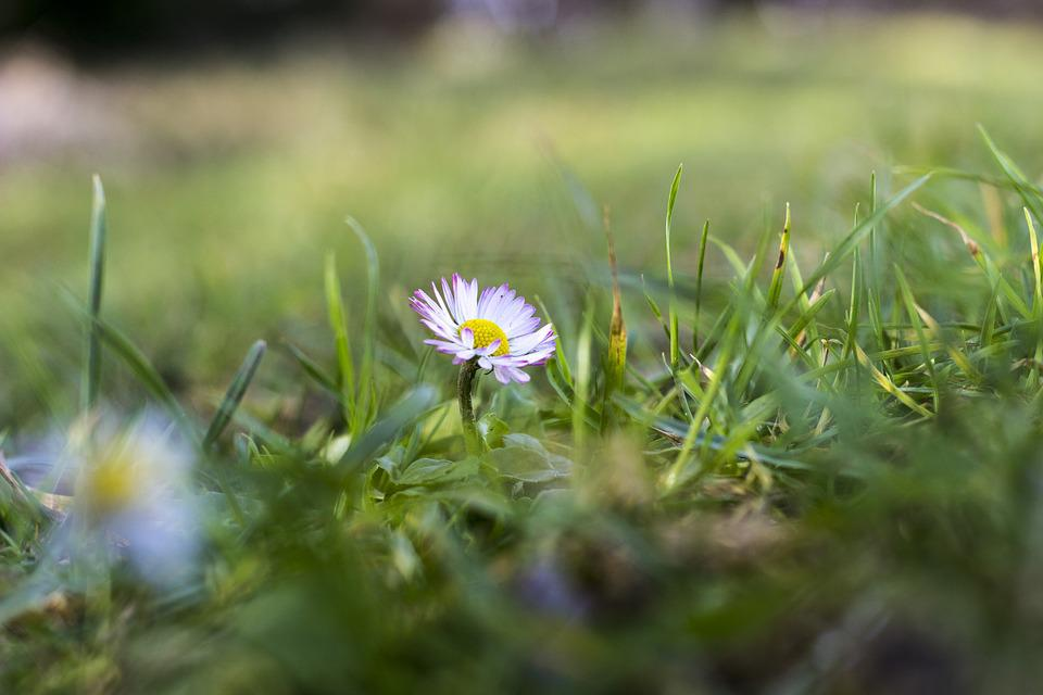 Daisy, Flowers, Nature, Spring, Blossom, Bloom, White