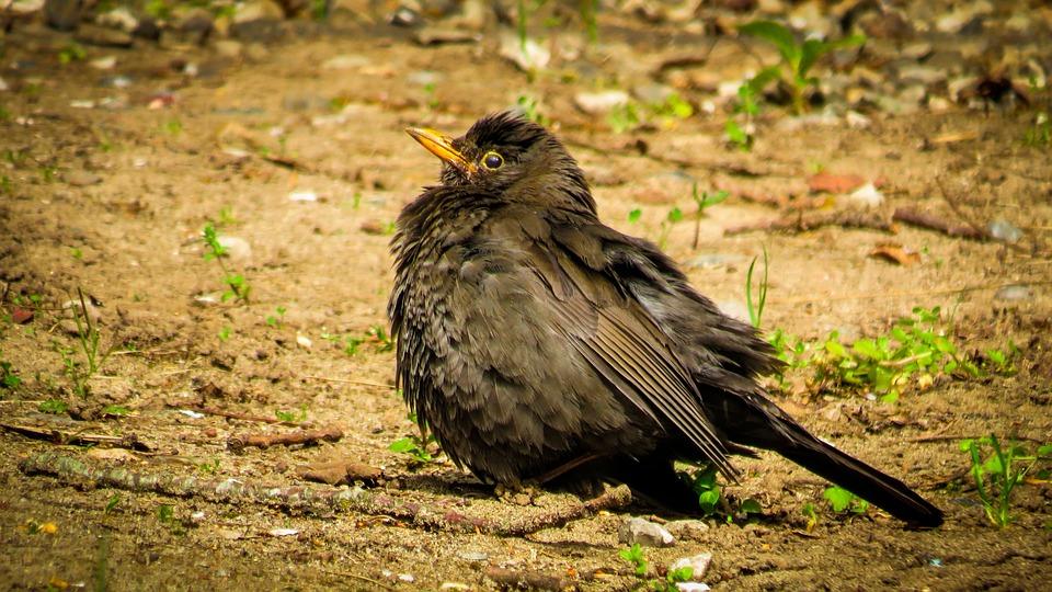 Bird, Plumage, Wildlife, Spring