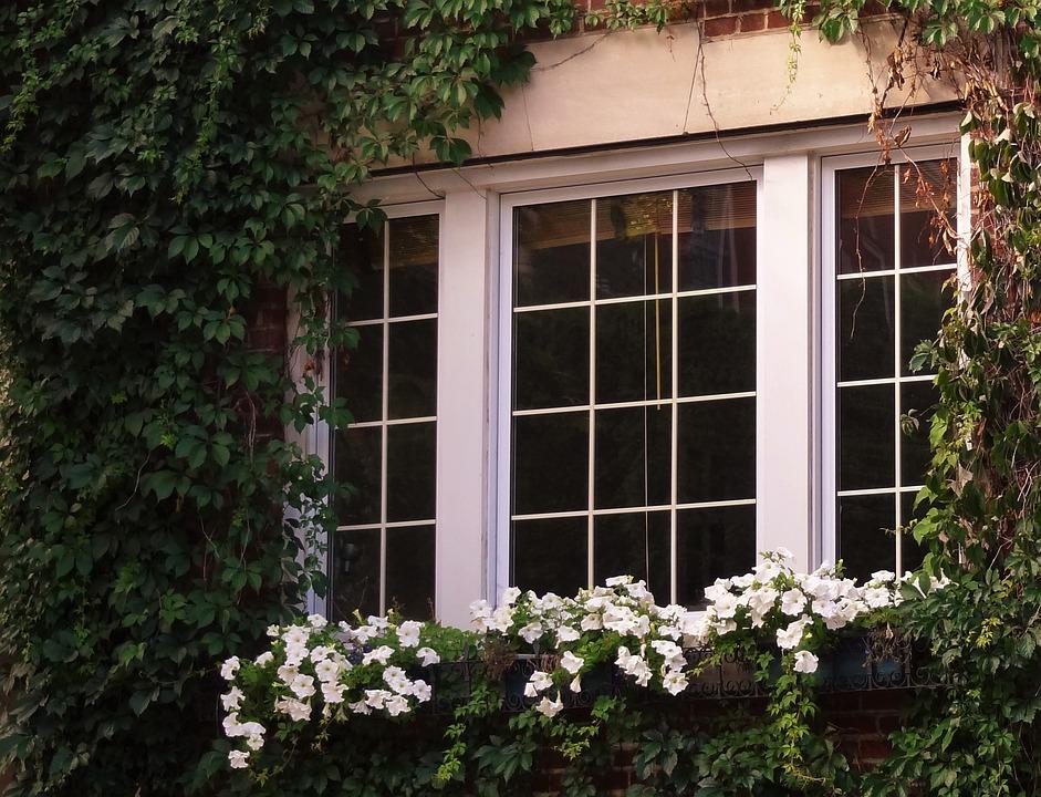 Windows, Flower, Spring