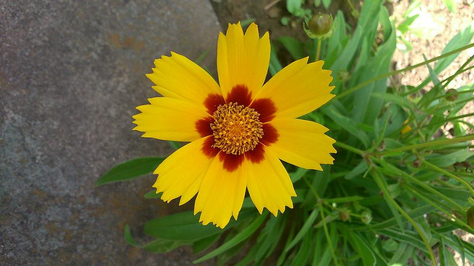 Flower, Yellow, Spring