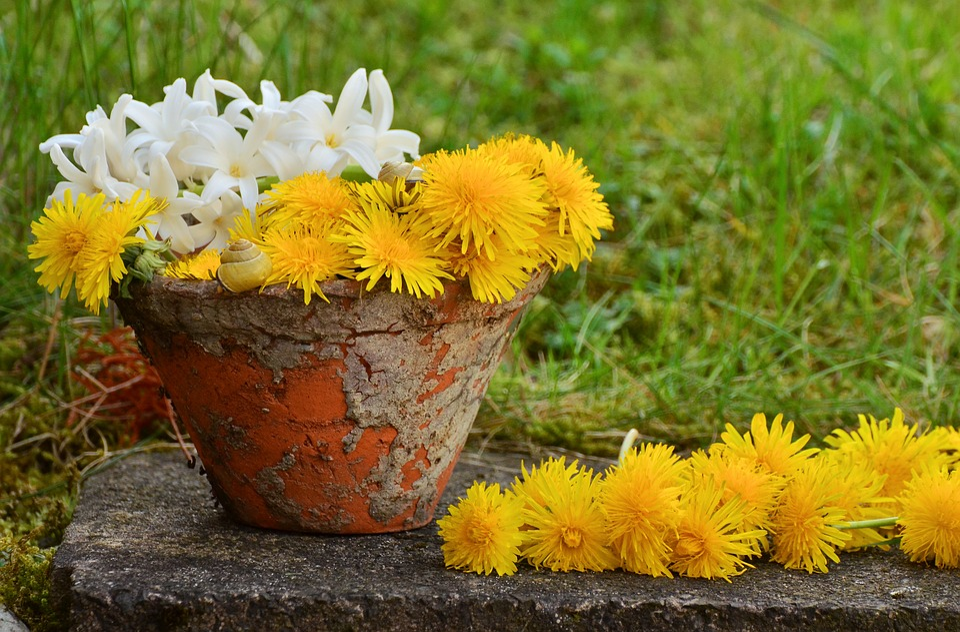 Flowerpot, Dandelion, Yellow, Still Life, Spring