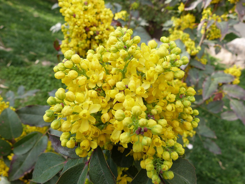 Flowers, Spring, Yellow, Bright, Nature, Yellow Flowers
