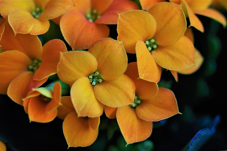 Flowers, Orange Flowers, Spring, Summer, Nature, Yellow