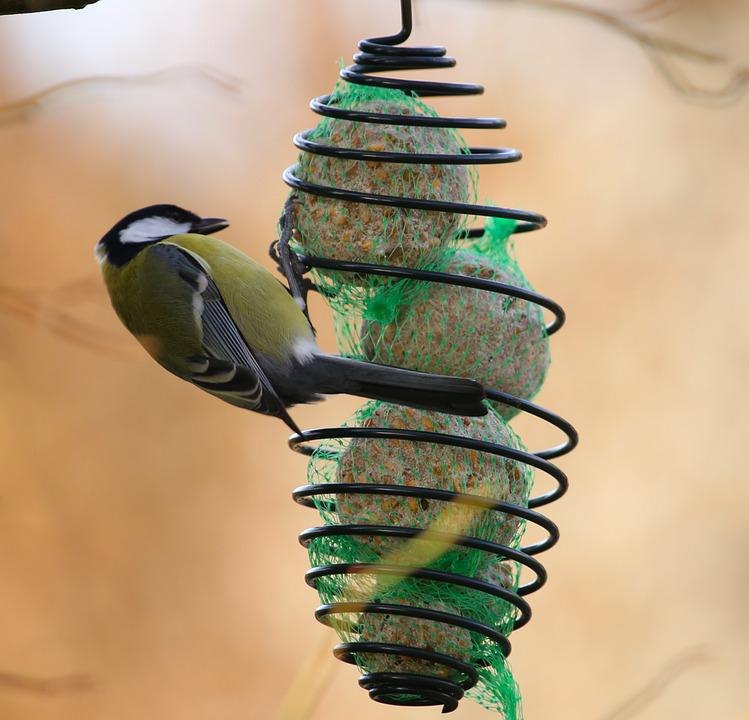 Bird, Blue Tit, Springs, Wing, Animals, Talgboll
