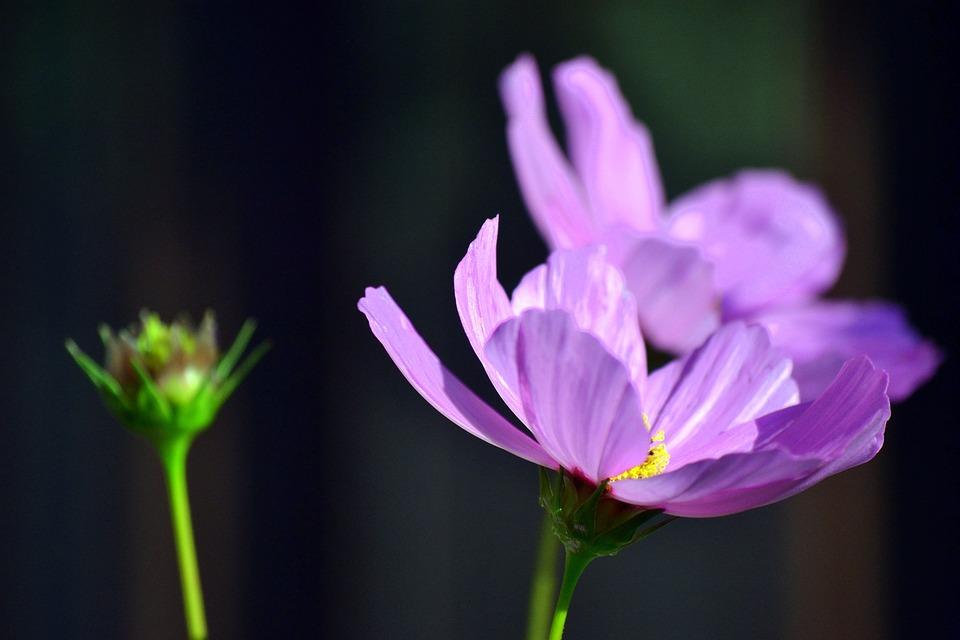 Blooming, Flowers, Springtime