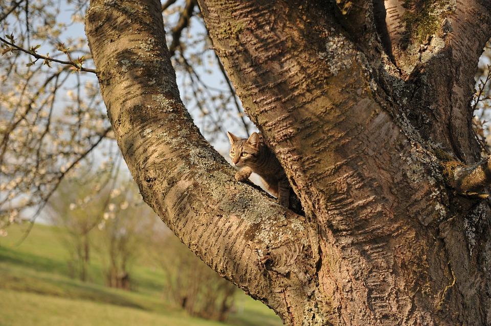 Tree, Cat, Climb, Pet, Spting