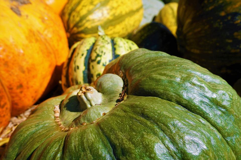 Squash, Picking, Autumn, Thanksgiving