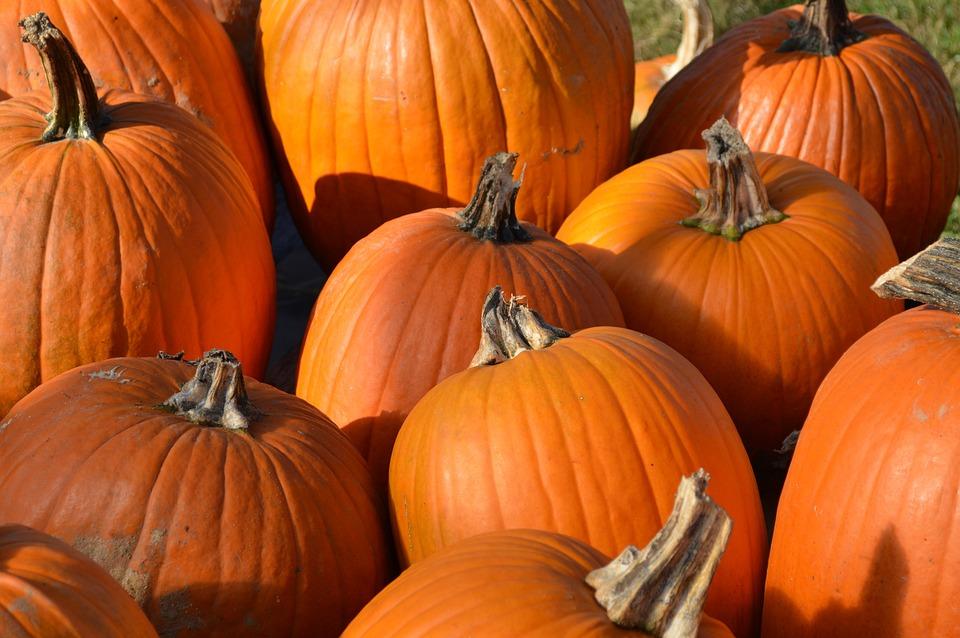 Pumpkins, Orange, Autumn, Fall, Squash