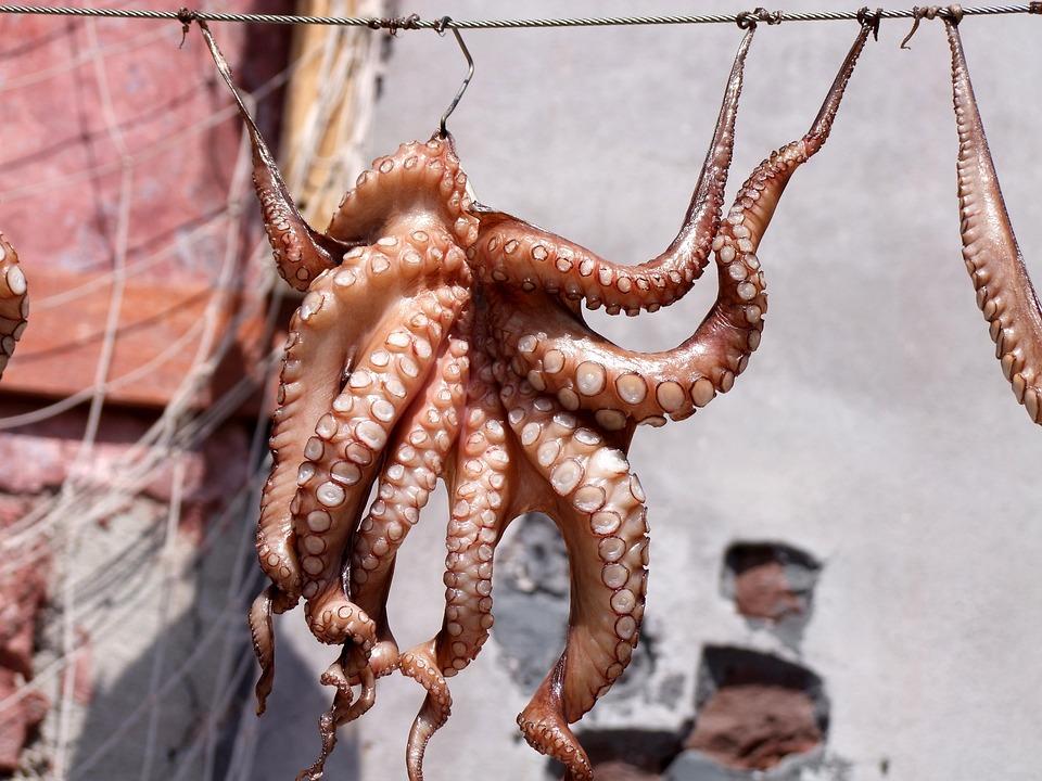 Squid, Octopus, Fish, Meeresbewohner, Dry, Delicious