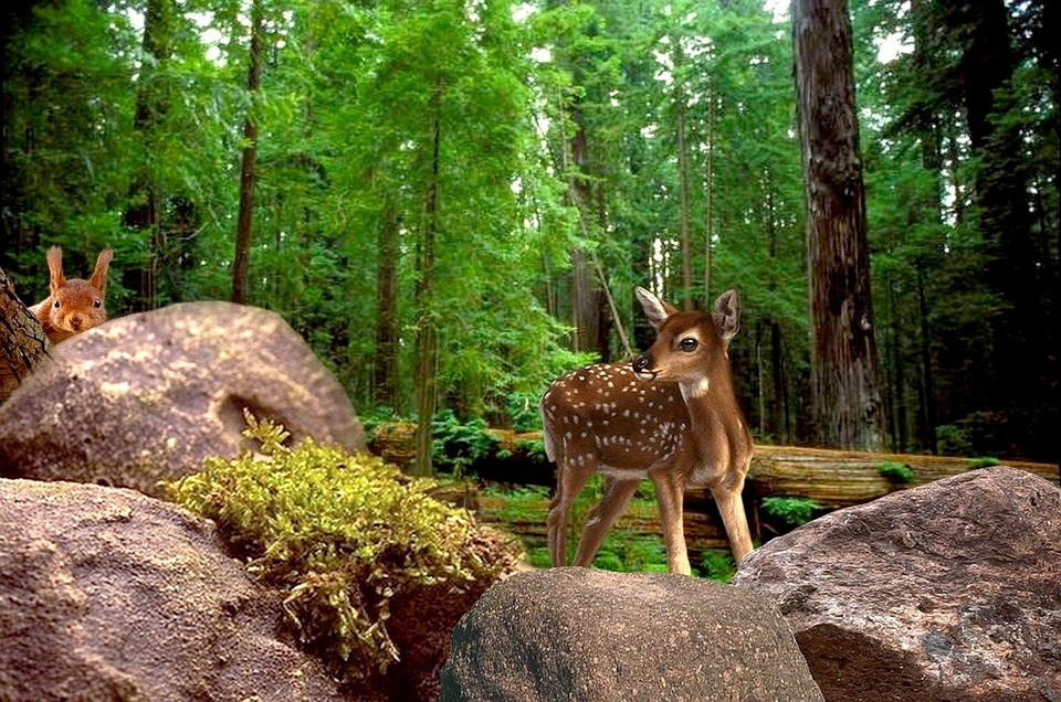 Nature, Forest, Animals, Tree, Deer, Squirrel