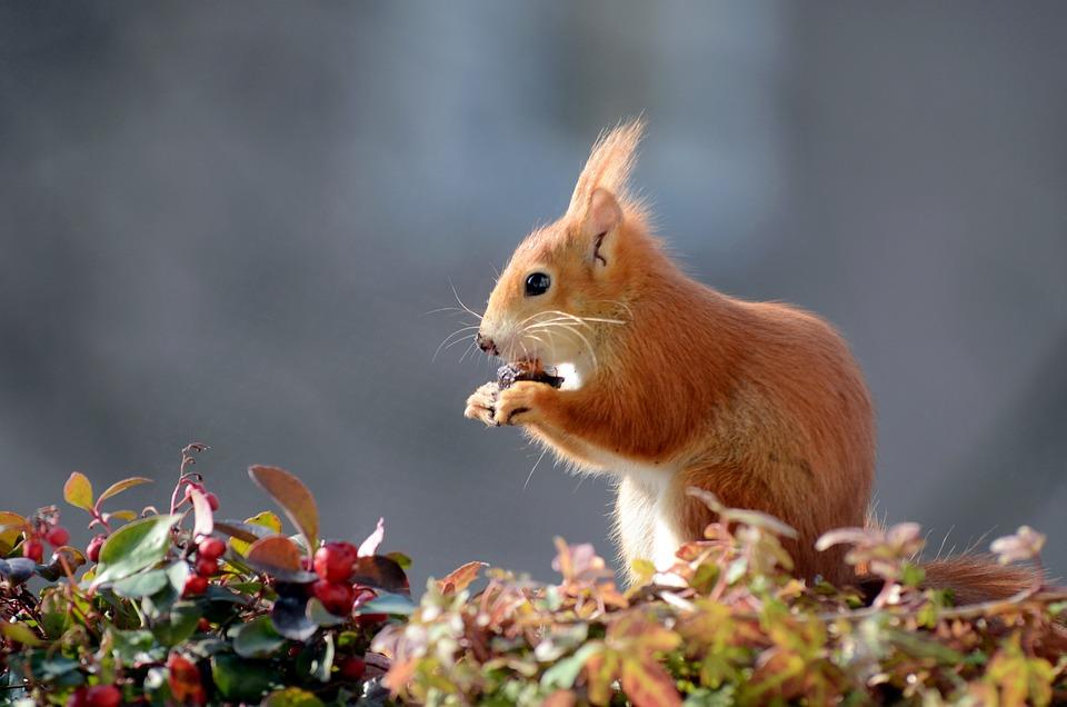 Squirrel, Croissant, Cute, Fur, Furry, Sweet