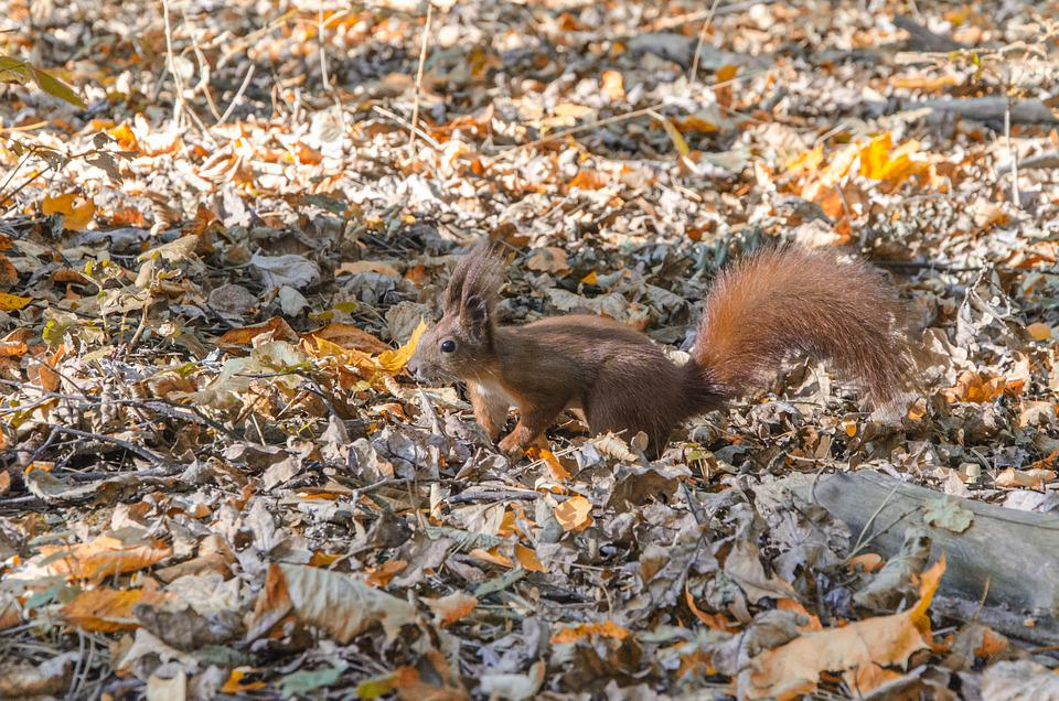 Squirrel, Rodent, Forest, Nature