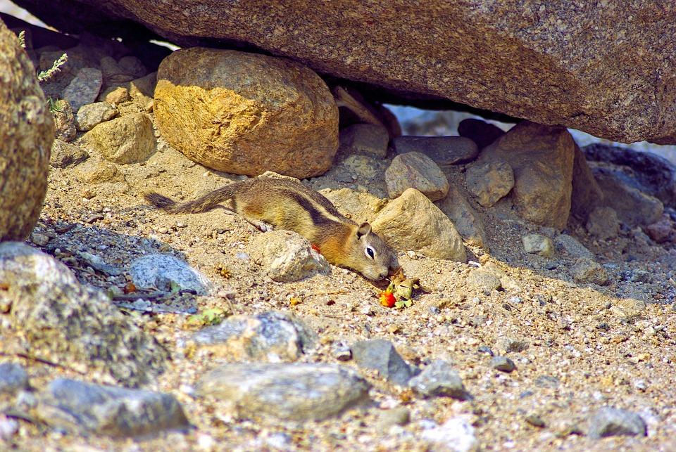 Ground Squirrel At Alluvial Fan, Ground, Squirrel