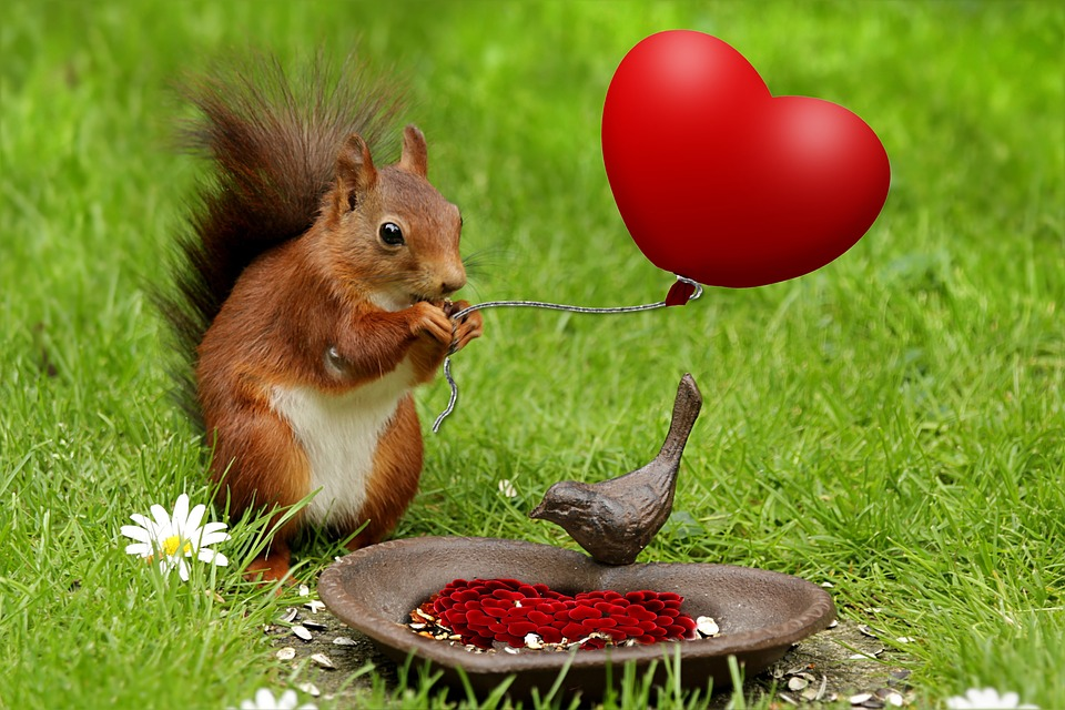Valentine, Heart, Animal, Squirrel, Holiday, Composite