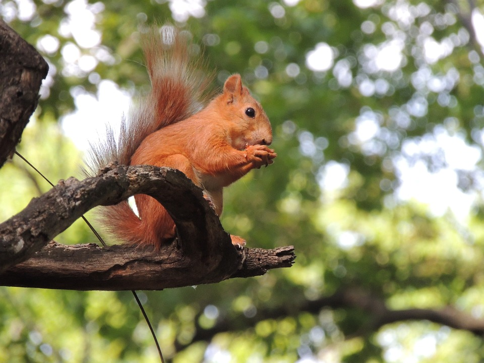 Squirrel, Park, In The Park, Living Nature, Rodent