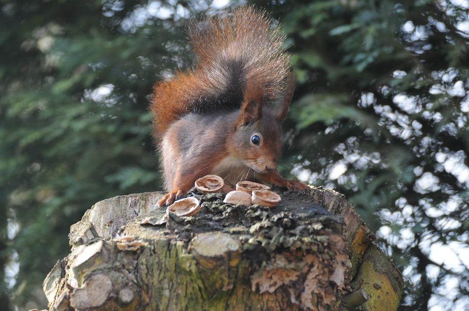 Tree, Mammal, Nature, Wood, Animal World, Squirrel
