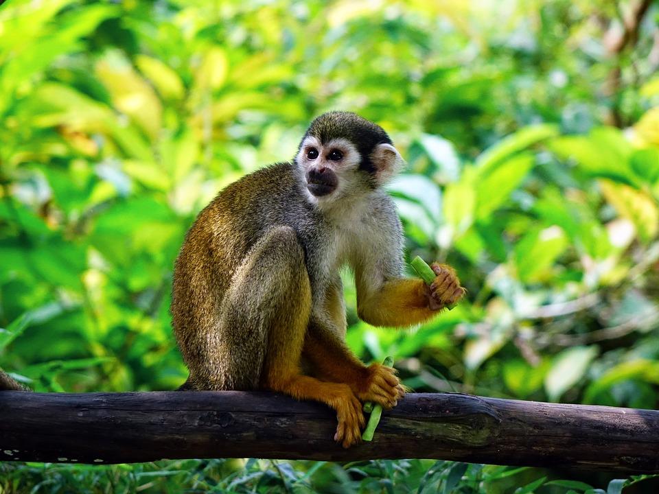 Squirrel Monkey, Monkey, Climb, Feeding, Zoo, Nature