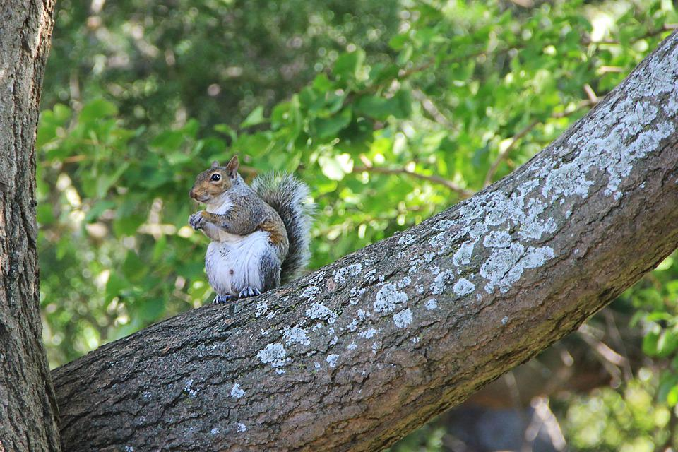 Squirrel, Tree, Nager, Nature, Gnaw, Cute