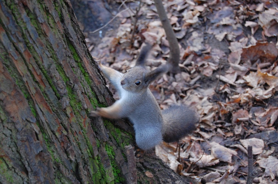 Squirrel, Forest, Cute, Nature, Animals, Tree, Mammal